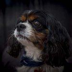 chloe-dog-_0034_1