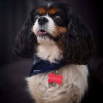 chloe-dog-_0050_1