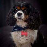 chloe-dog-_0055