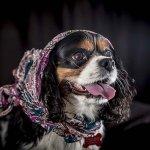 chloe-dog-_0086