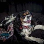 chloe-dog-_0093_1