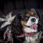 chloe-dog-_0096