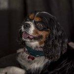 chloe-dog-_0102