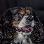 chloe-dog-_0112