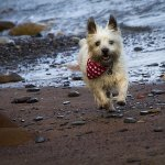 dog-photography-buster
