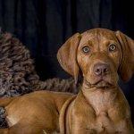dog-studio-25-6-18_0015