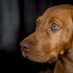 dog-studio-25-6-18_0025