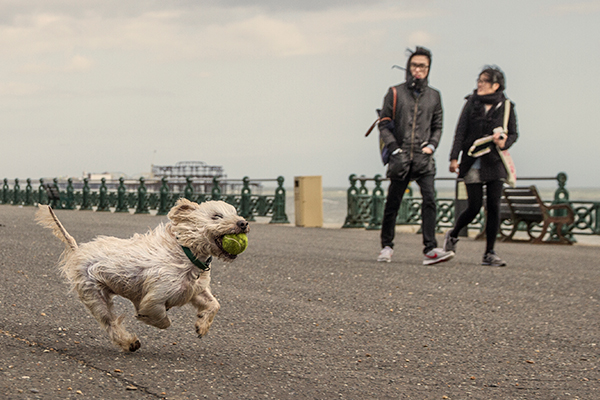 dog-photogaphy-brighton-hubba