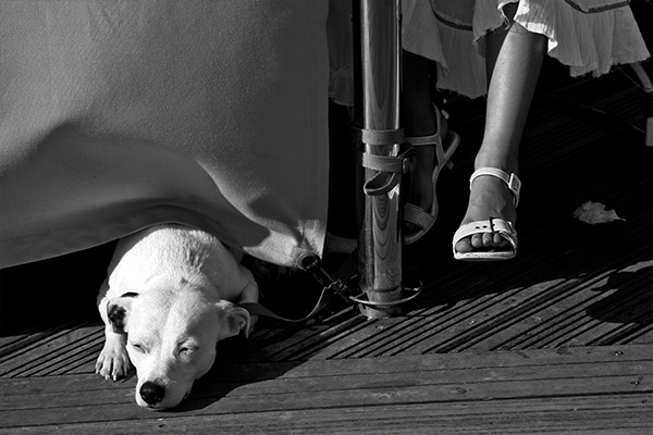 dog-photogaphy-brighton-marina