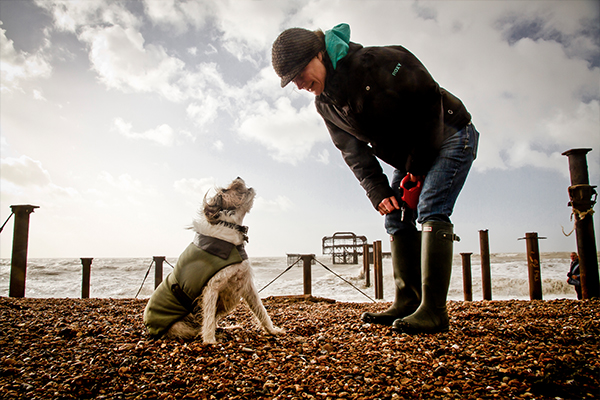 dog-photogaphy-brighton-west-pier