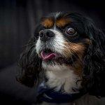 chloe-dog-_0035_2