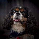 chloe-dog-_0046