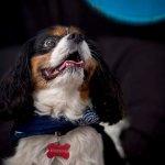 chloe-dog-_0058