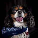 chloe-dog-_0083_1