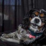 chloe-dog-_0111