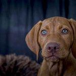 dog-studio-25-6-18_0019