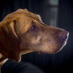 dog-studio-25-6-18_0021_1-jedda-2