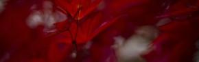 autumn image - sheinwald
